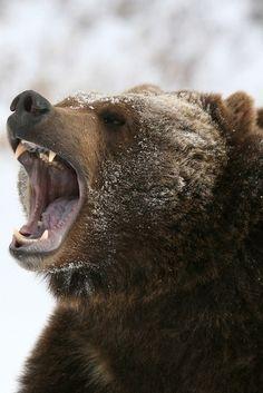 kippis karhu!